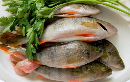 鲜鱼等鲜活水产品冷库保鲜贮藏方法介绍